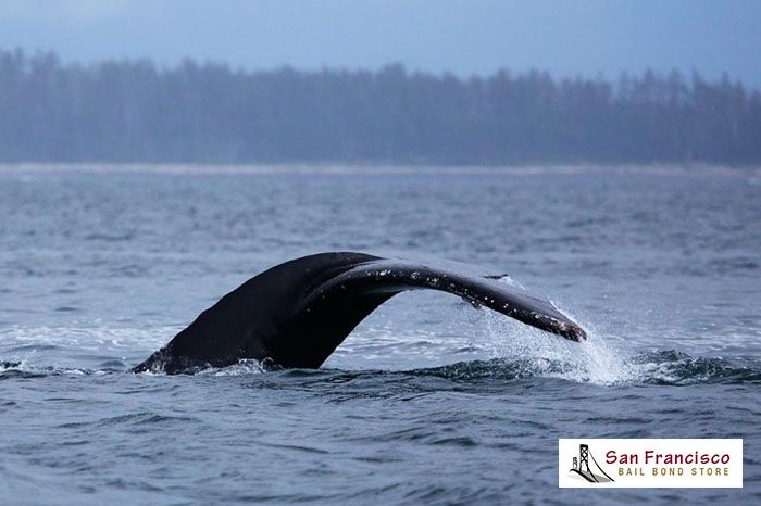 Have Plans to Go Whale Watching? Don't Let an Arrest Stop You